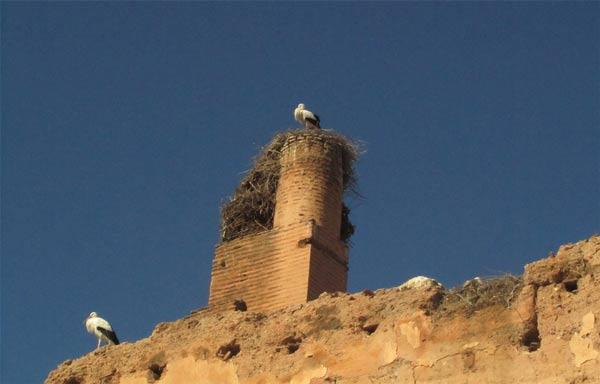 el-badi palace marrakech storks