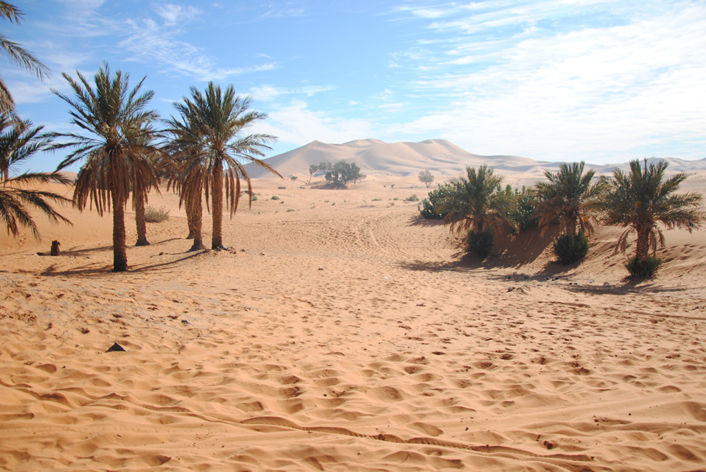 Desert Tours And Excursions From Marrakech To The Sahara
