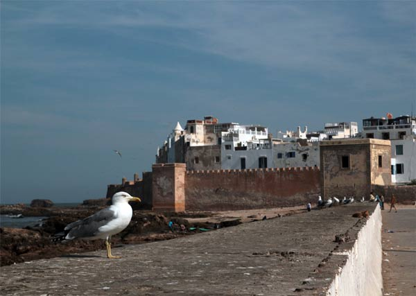 At the port in Essaouira