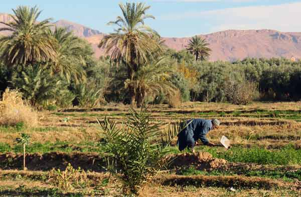 Farmer in the Dades valley on Morocco