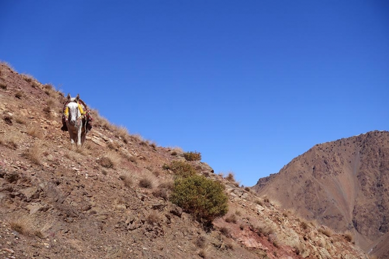 Mule Atlas Mountains