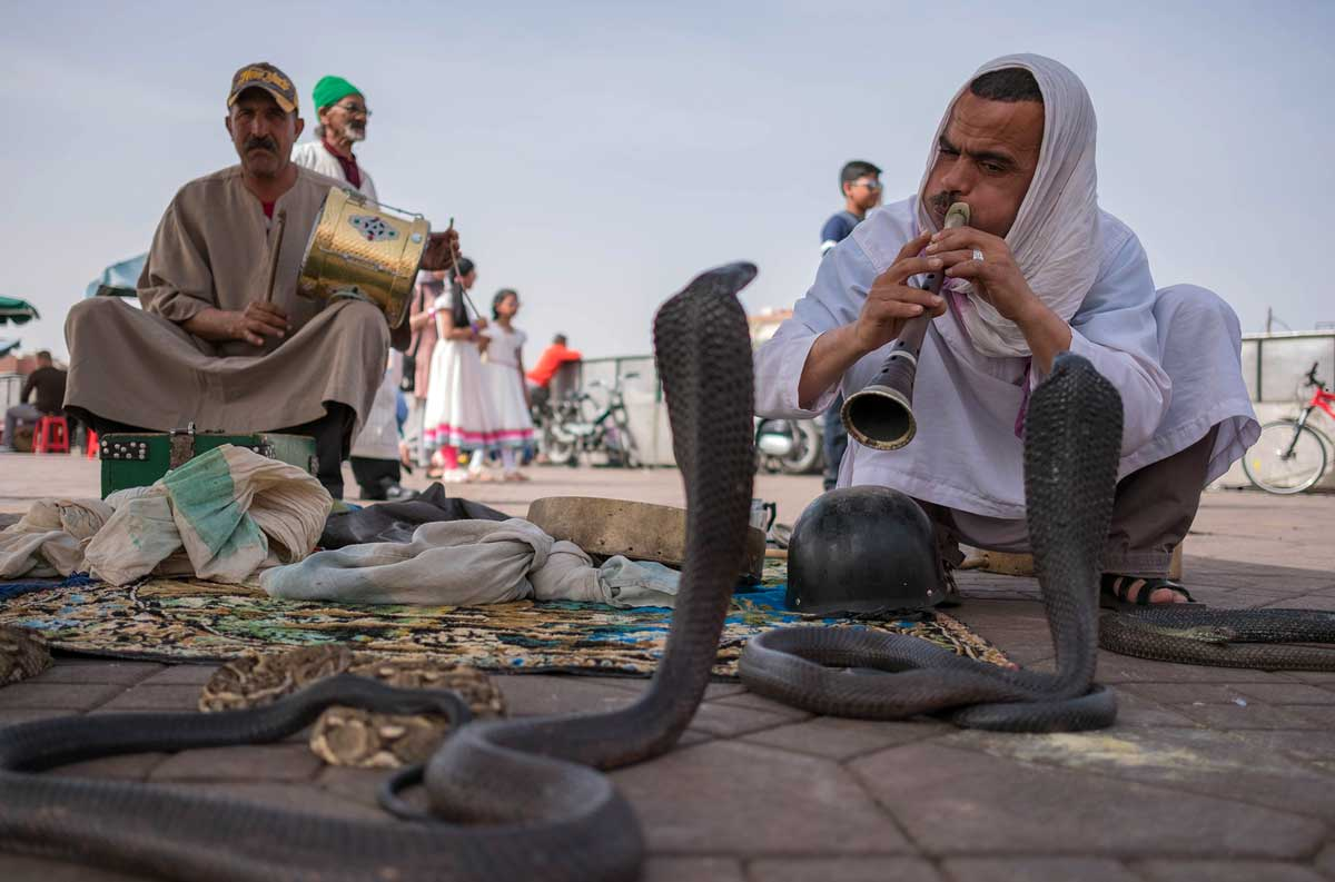 photo scam with snakes on Jemaa el Fna in Marrakech