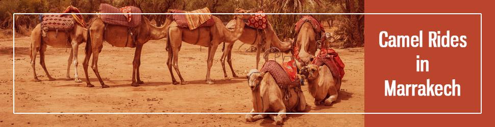 camel ride Marrakech